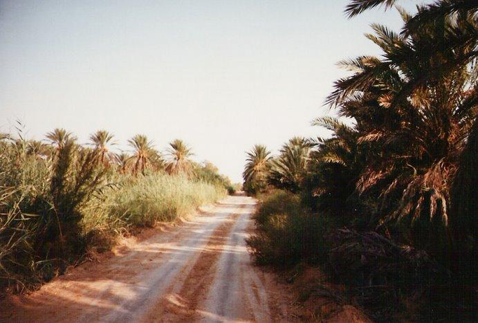 Pistas de arena cruzan tres oasis, verdaderos vergeles, por donde discurría la ruta