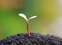 A small sapling grows up into a big tree.