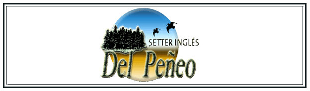 setter ingles del peeo