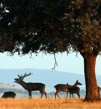 Fauna de los Montes de Toledo