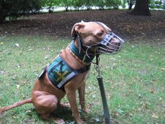 Shasta, Certified Service Dog, Ontario, Canada