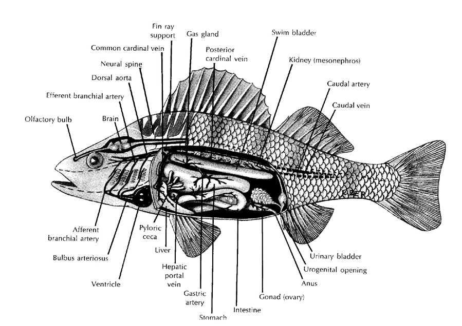The Vet\'s Secretary: Fish Vet??