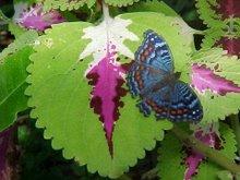 Forest Butterflies