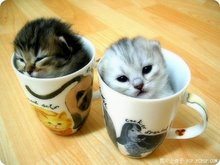 CuTe LiTtLe KiTtY iN CuP