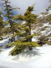 Paisajes   de   Sierra   Nevada