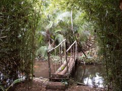 La forêt à Luciole