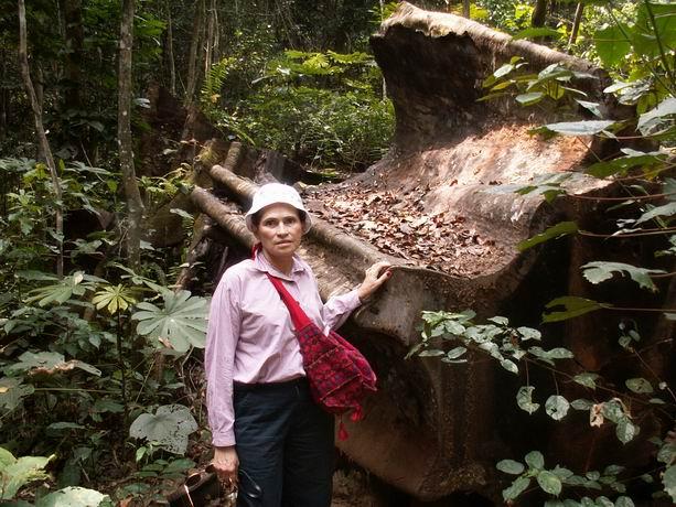 argentina dans le forêt