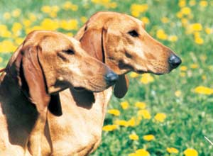 Pianeta cane tutto per il tuo amico cane for Cani giocherelloni