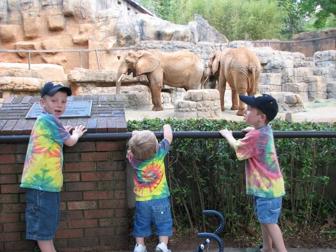 The Elephants!