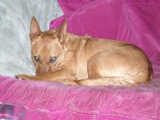 Rex re-homed 2006