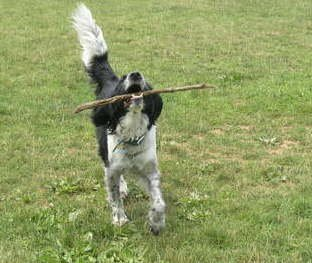 Low-tech pooch: A stick can make Pepper so happy.