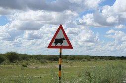 die koei
