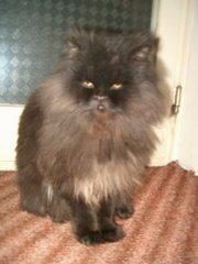 Ο γάτος μου,Eddie!!!