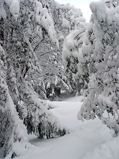 snow storm, Nov. 2006, photo by Robin Atkins