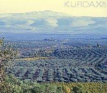 Kafar-Safrê - baxê ji zeytûnan
