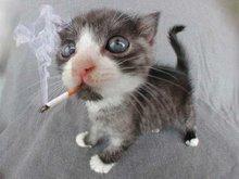 Ora cá está um gato dos meus!