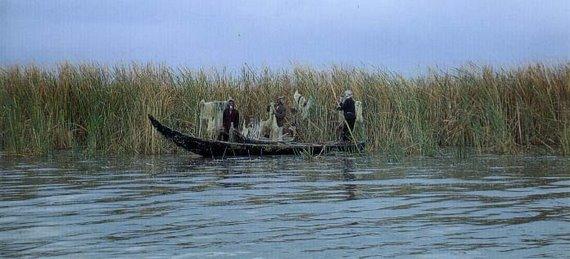 صيادي السمك - هور الحويزة