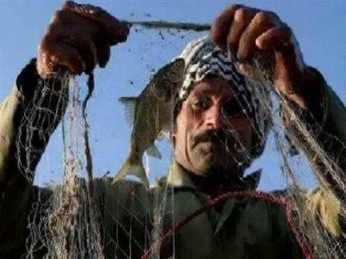 صياد السمك- هور الفلاحية