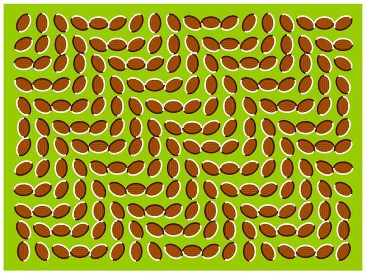 Para dentener el movimiento, mira fijamente una de las semillas del cuadro...