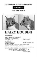 Hairy Houdini
