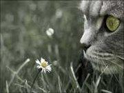 Além da beleza e da calma, os gatos são persistentes