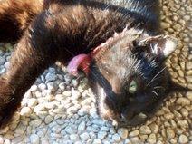 Didi, la mia gatta
