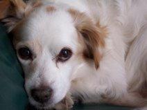 Sura, il mio cane