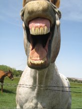 My Horse, Laughing