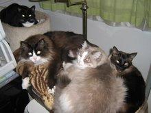 The Feline Crew