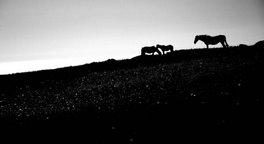 caballos en ritoque