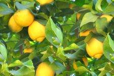 When Life Gives Us Lemons