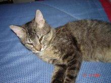 Fiona, mi mascota también en el blog