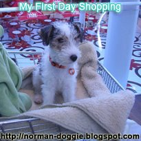 My First Day Shopping