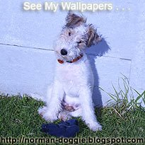 Wire Fox Terrier Wallpapers