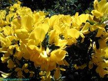ボニファシオに咲く花