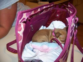 Pampered Puppy's New Home