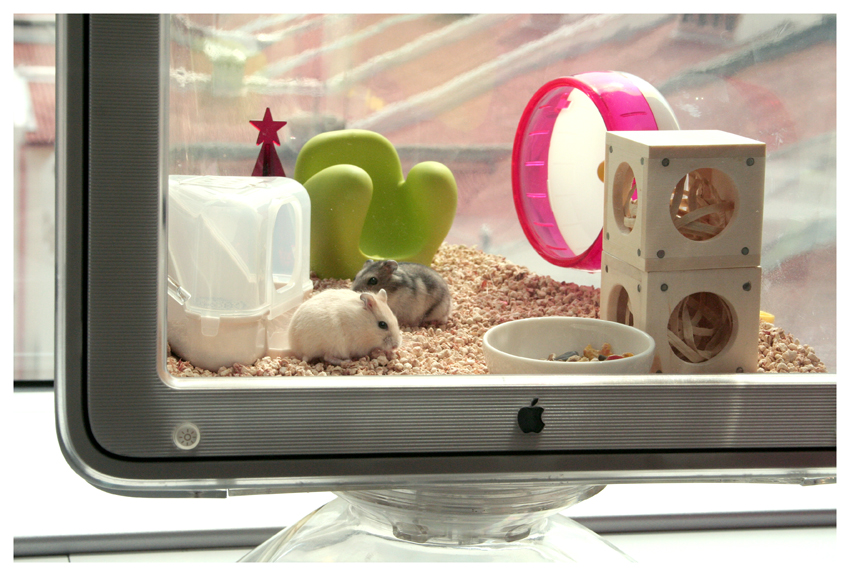 Bedding For Hamsters Gucci and Prada's Online Home, Best Viewed on a Mac!: The ...