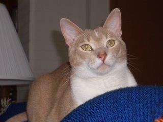 Caring Hearts Cat Rescue Thunder Bay