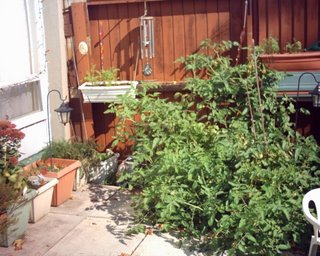 2006 before tomatoes removed