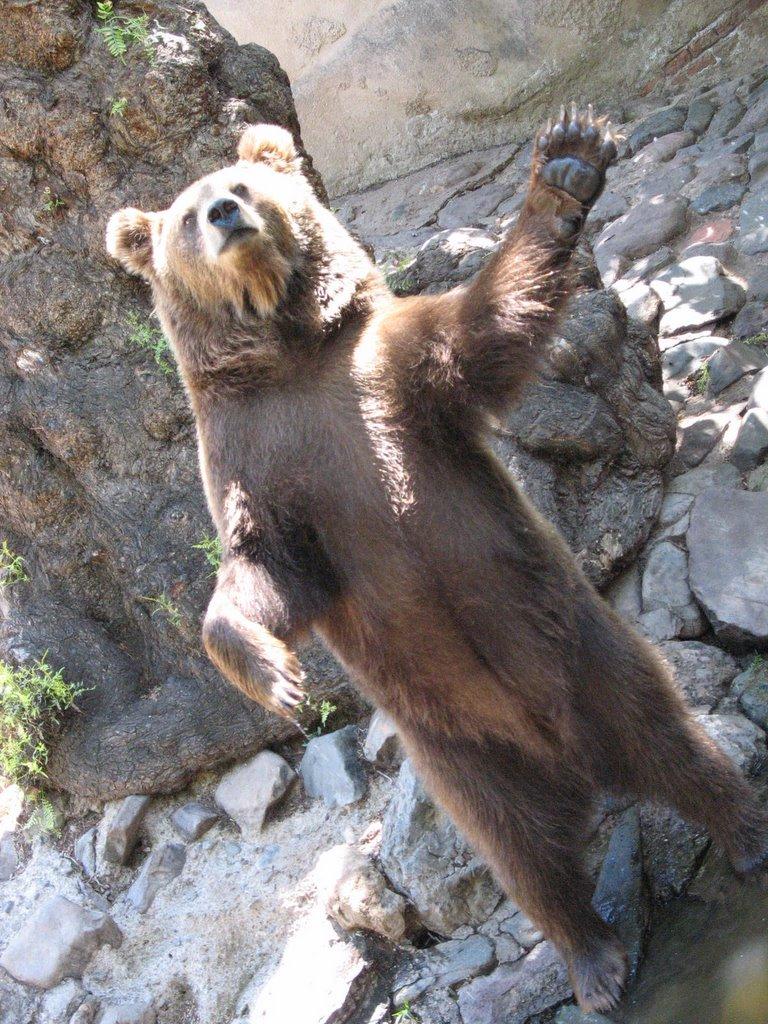 Poca Letra Zoo De Mendoza