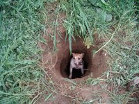 Happy in the Hole