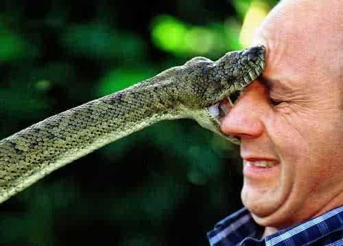 Frappy S Snake Pit