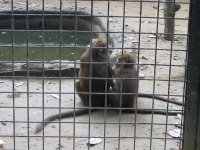 The problem with city zoo 1