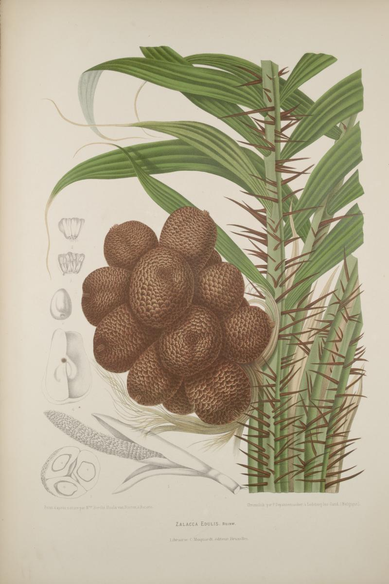 Full Size Van >> BibliOdyssey: The Fruits of Java