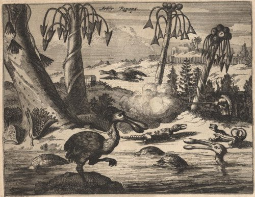 sylised engraving of fauna + flora in S.America
