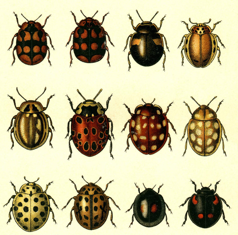 Its A Wonderful Li >> BibliOdyssey: Butterflies and Beetles