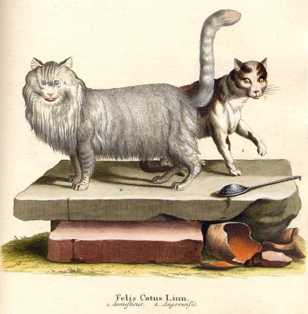 Bibliodyssey The Concept Of Mammals