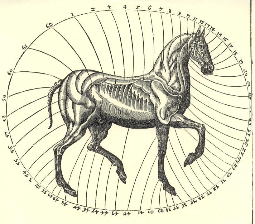 decoration: Equus