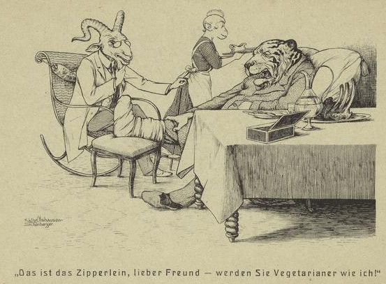 injured tiger and goat sitting in chairs