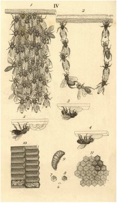 bee attachment patterns